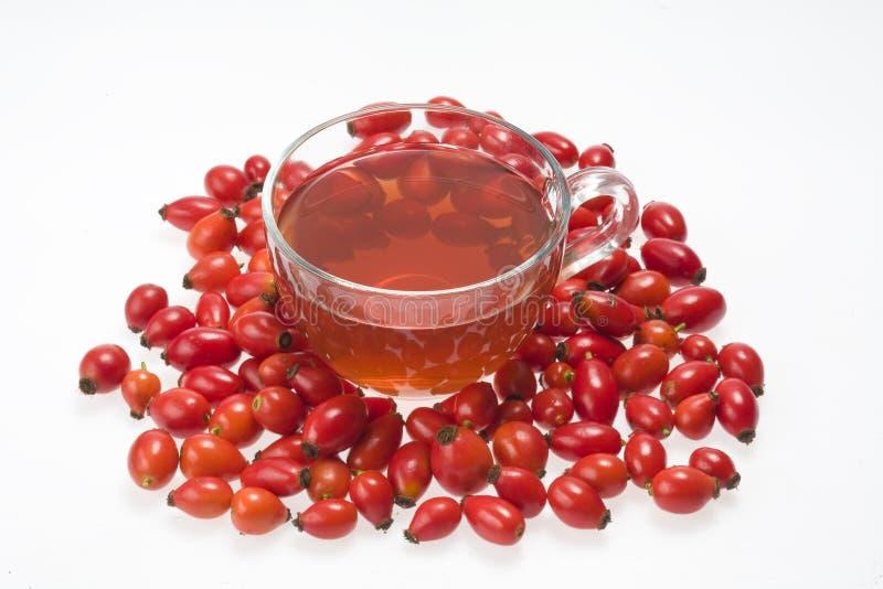różana biodro herbata fotografia royalty free