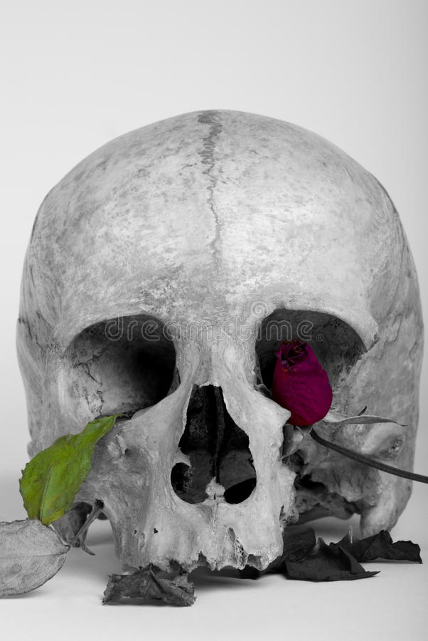różana czaszka zdjęcia stock