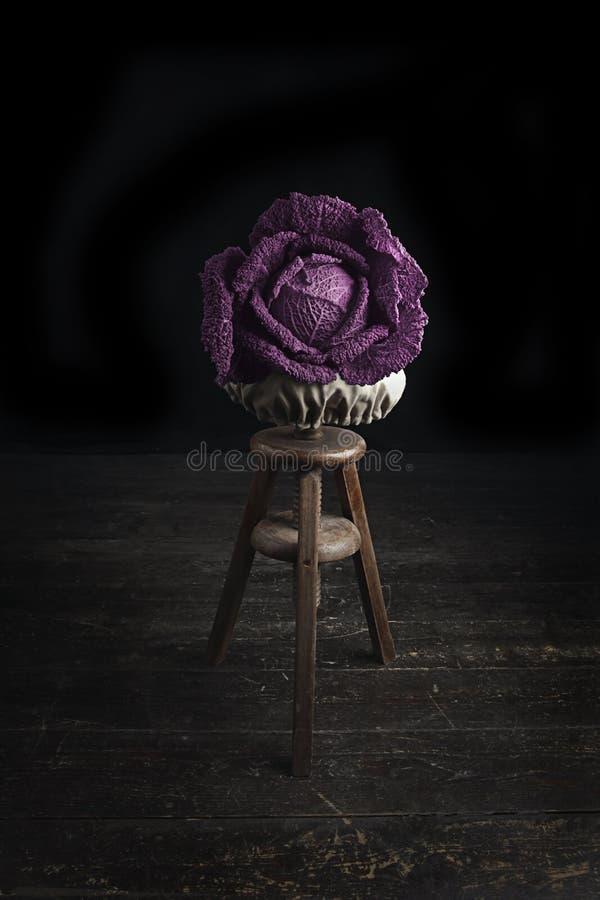 Różana kapusta fotografia stock
