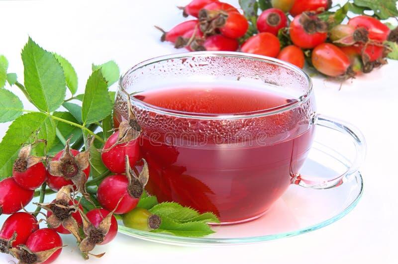 Różana modna herbata 03 obrazy royalty free