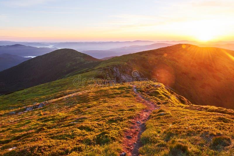 Różaneczniki kwitną w pięknej lokaci w górach piękny zachód słońca Kwitnący różaneczniki w górach zdjęcie royalty free