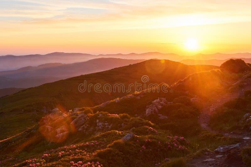 Różaneczniki kwitną w pięknej lokaci w górach piękny zachód słońca Kwitnący różaneczniki w górach obrazy stock