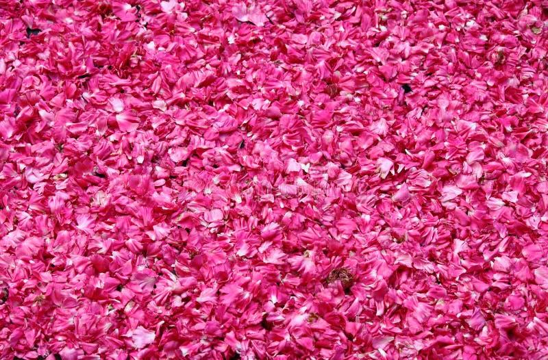 Różani płatki dla sprzedaży zdjęcia stock