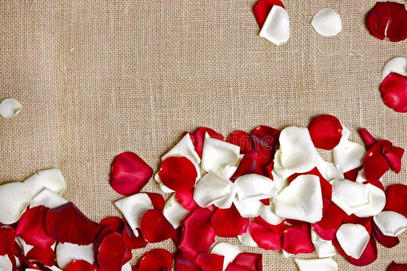 Różani płatki na pościeli zdjęcie royalty free
