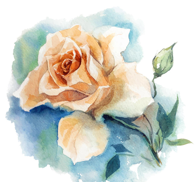 Różany akwareli nakreślenie royalty ilustracja