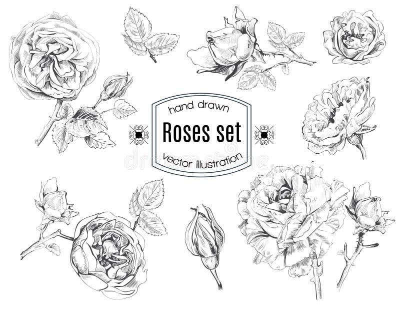 Różany grafika set ilustracji