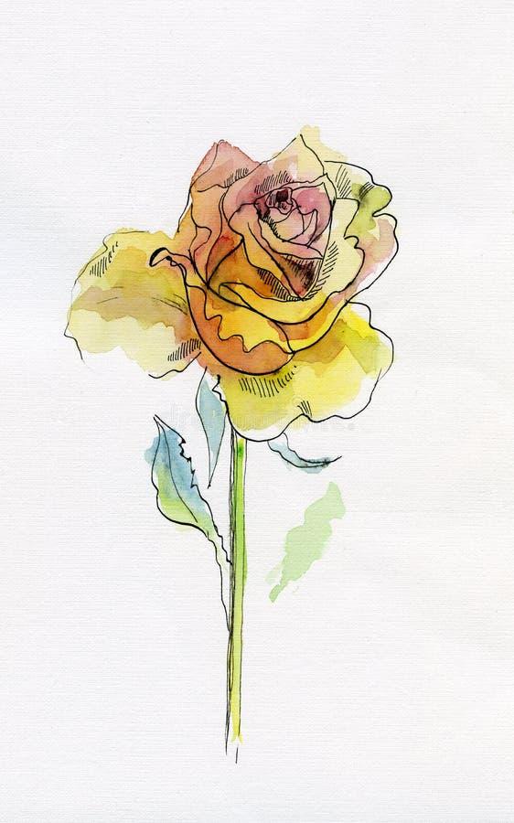 różany kolor żółty ilustracja wektor