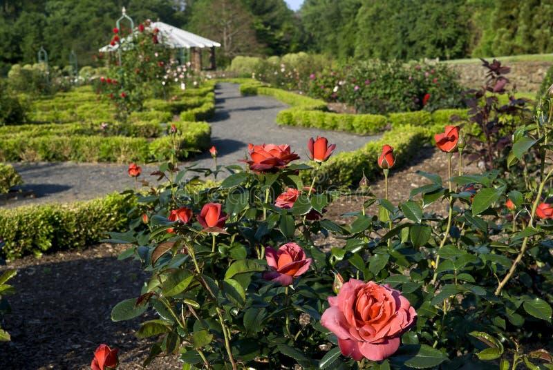 różany ogródu widok obraz stock