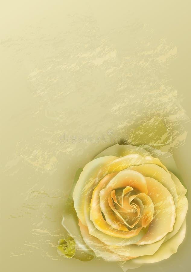 różany oliwka rocznik obraz royalty free