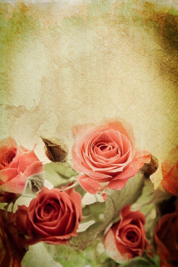 różany rocznik fotografia stock