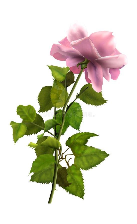 Różany rocznik obraz stock