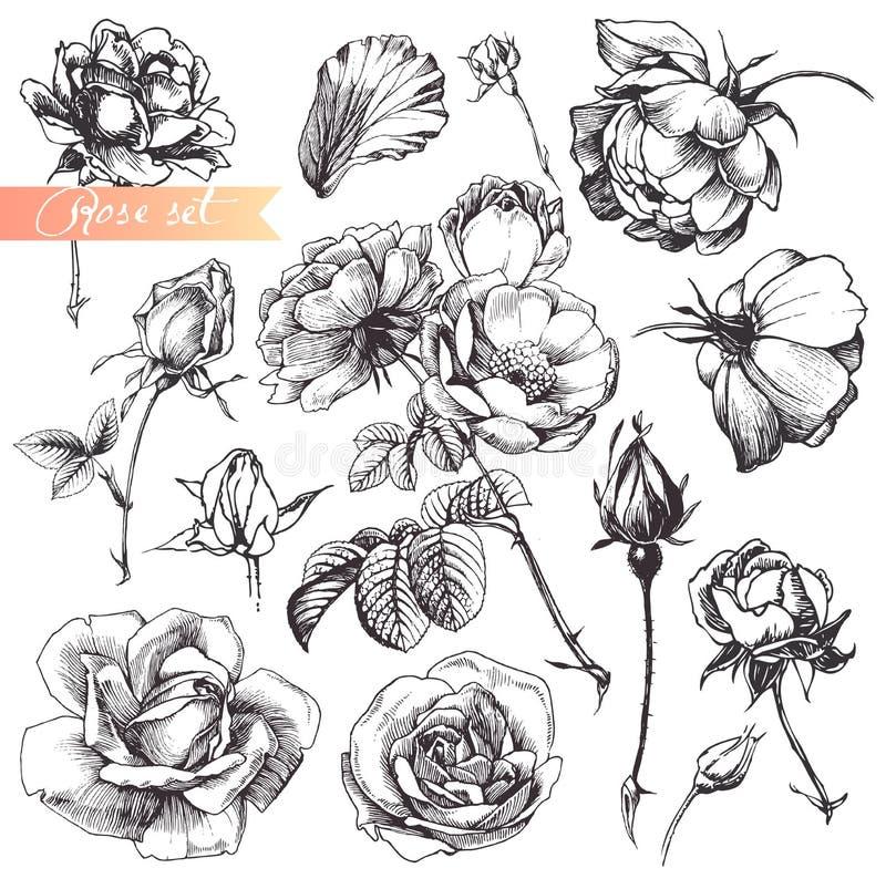 różany set royalty ilustracja