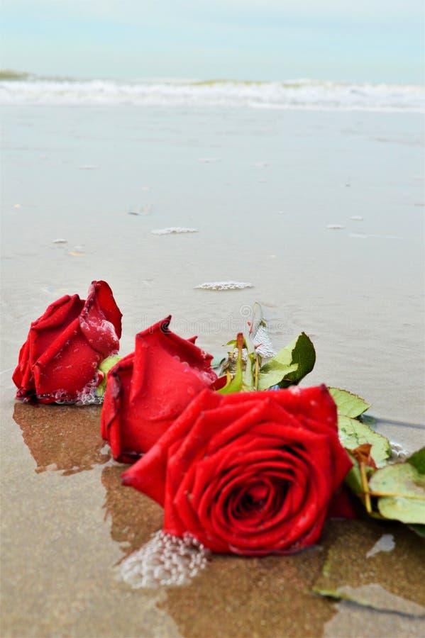 Róże i fala, symbole zdjęcie royalty free