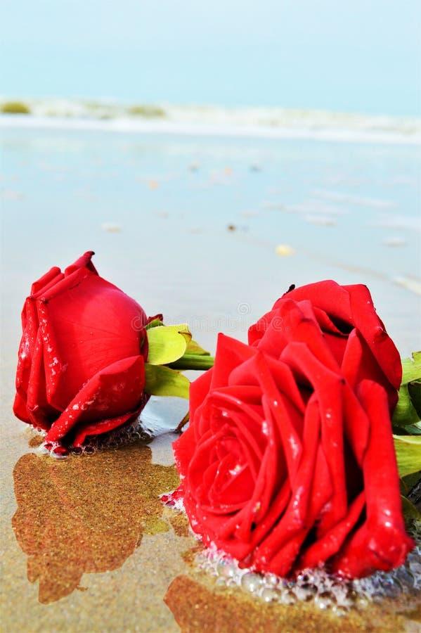 Róże i morze, romantyczni symbole zdjęcie stock