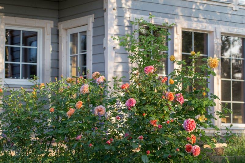 Róże i zielarski ogród na zewnątrz dom na wsi fotografia stock