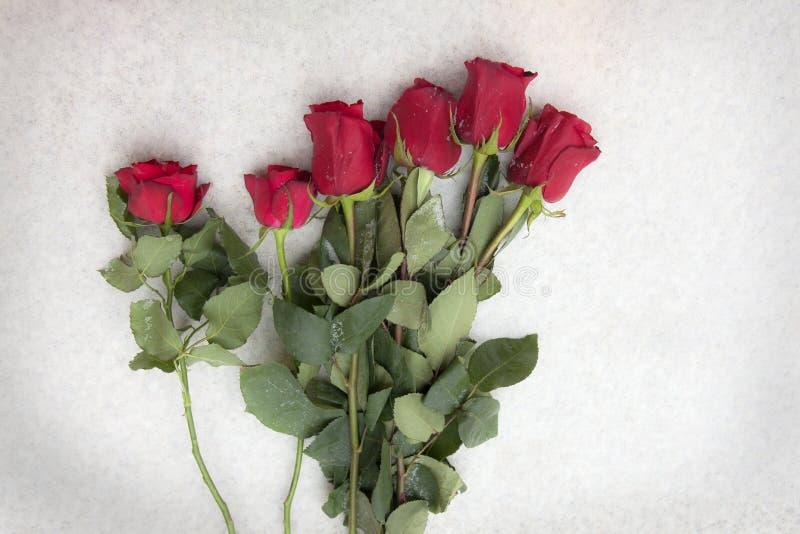 Róże na śniegu obraz stock