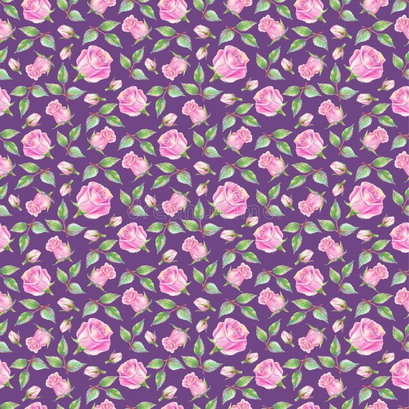 Róże na fiołkowym tle bezszwowy kwiecisty wzoru tła rysunku ołówka drzewny biel obraz stock