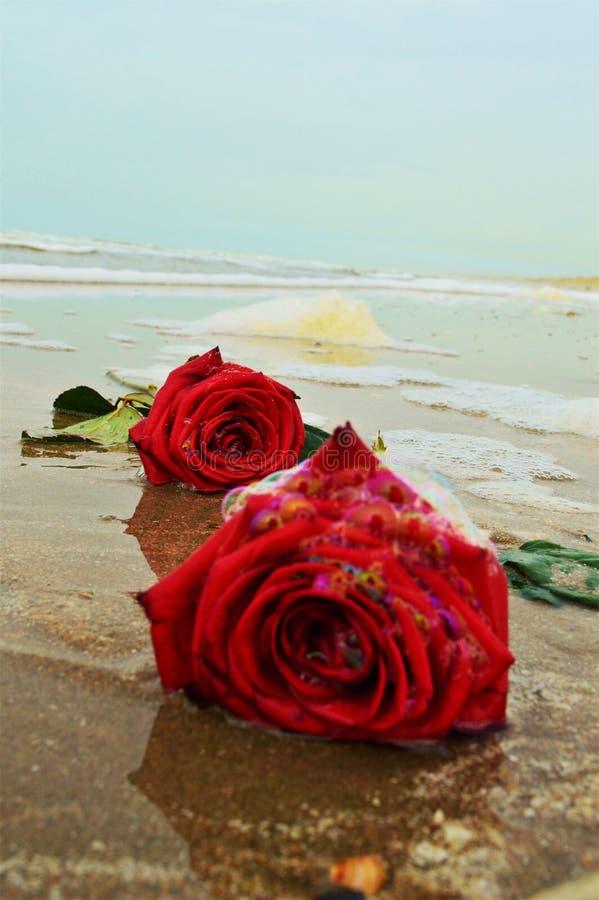 Róże na piasku, symbol zdjęcia stock