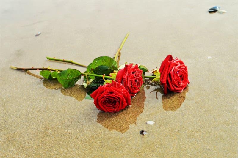 Róże na piasku, symbole zdjęcie stock