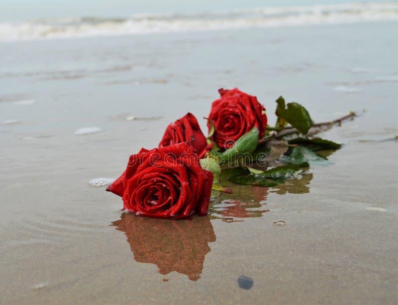 Róże na seashore, romantyczni symbole zdjęcie stock