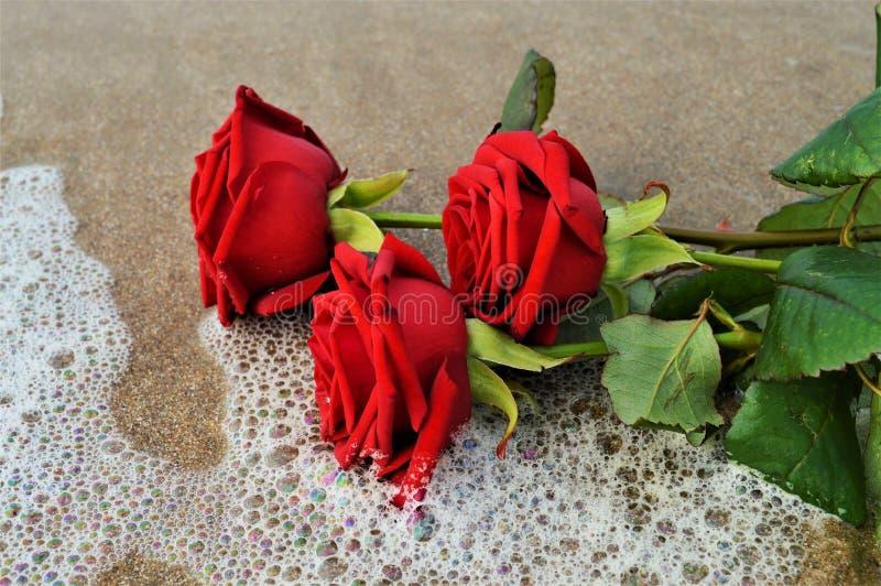 Róże na seashore, symbole zdjęcie stock