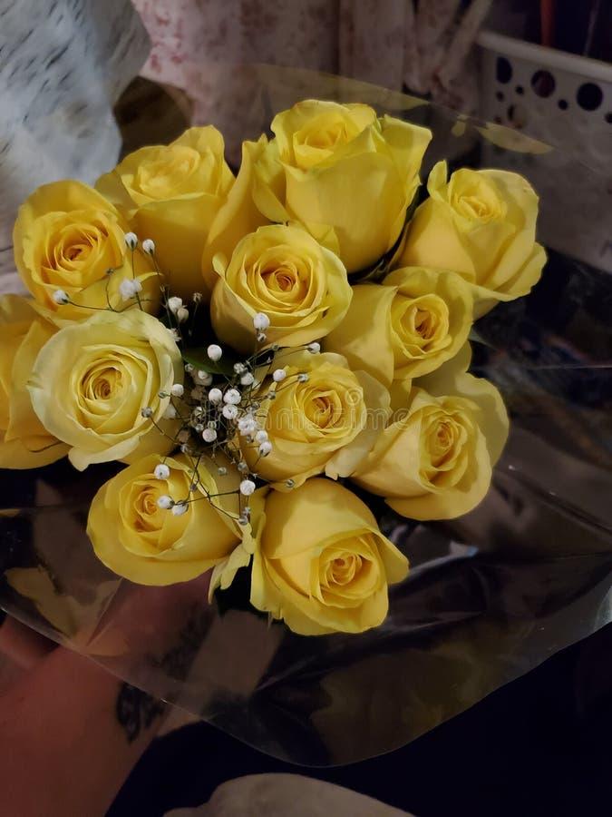 Róże są żółte fotografia royalty free