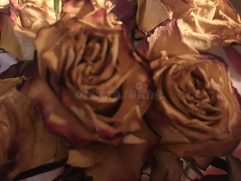 Róże są wszystkie kolorami obraz royalty free