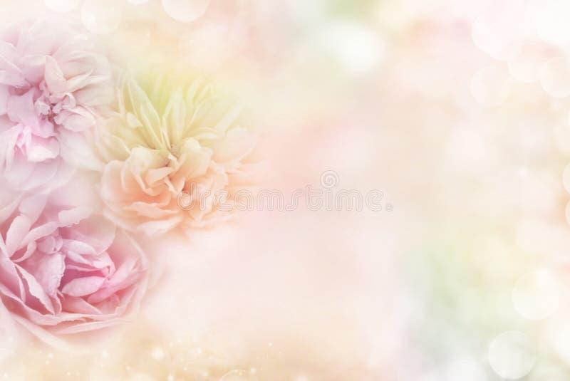 Róże w miękkim pastelowym tle który przenosi pojęcia miłości walentynki ` s dzień, obrazy stock