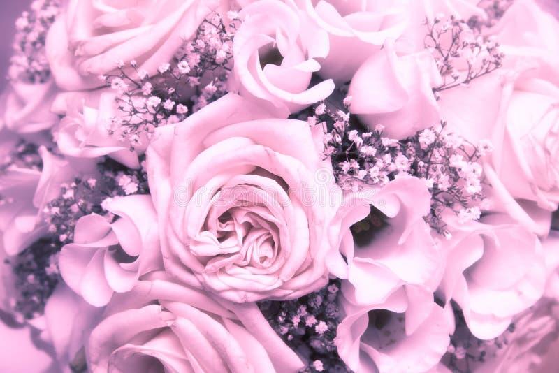 róże wiązek zdjęcie stock