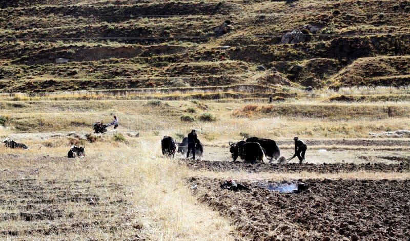Różna hodowlana metoda w Tibet obrazy royalty free