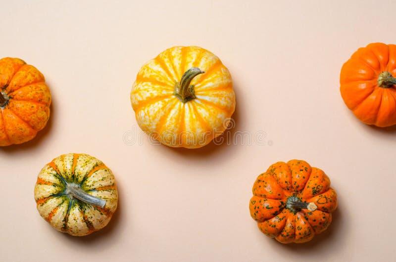 Różne Kolorowe banie, jesieni dziękczynienie i Halloween tło, obrazy stock