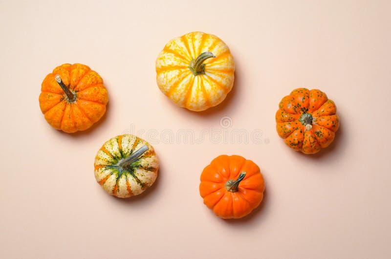 Różne Kolorowe banie, jesieni dziękczynienie i Halloween tło, obraz royalty free