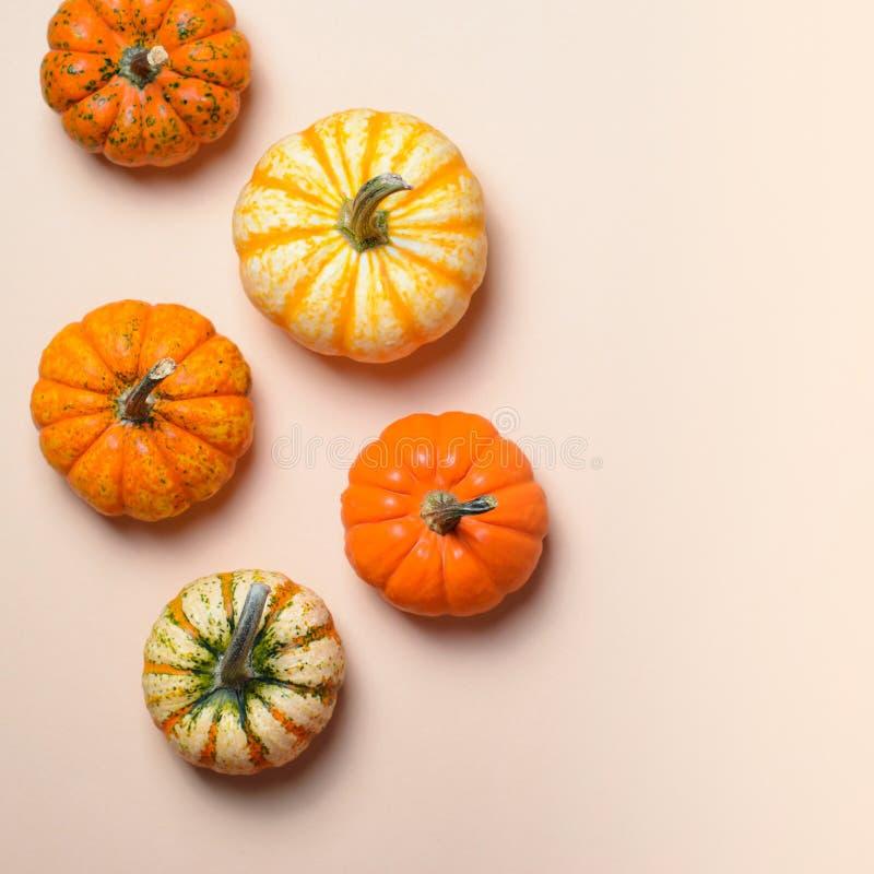 Różne Kolorowe banie, jesieni dziękczynienie i Halloween tło, zdjęcie royalty free