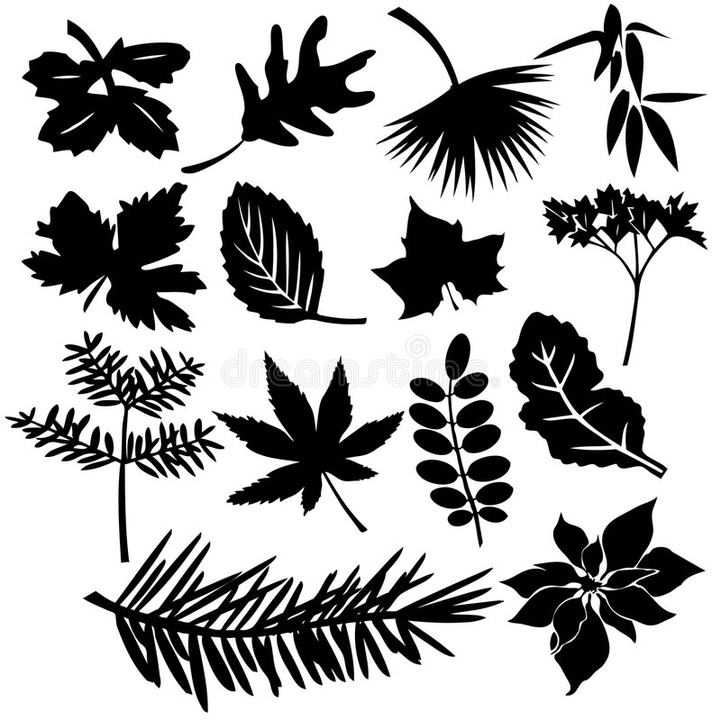 różne liście ilustracja wektor