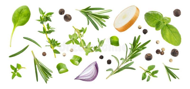 Różne pikantność i ziele odizolowywający na białym tle, odgórny widok zdjęcie stock