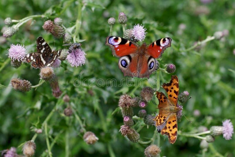 Różne rodzaje motyli razem w zakładzie obraz royalty free
