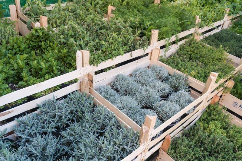 Różni świezi zieleni ziele na targowy plenerowym obrazy royalty free