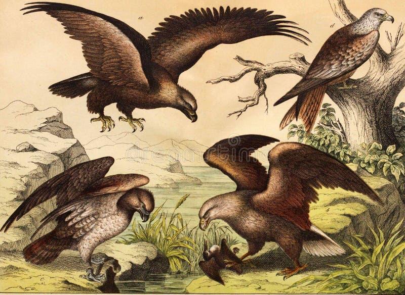 Różni gatunki ptaki w dzikim royalty ilustracja