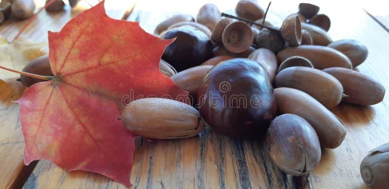 Różni kasztany i acorns na drewnianym tle obraz stock