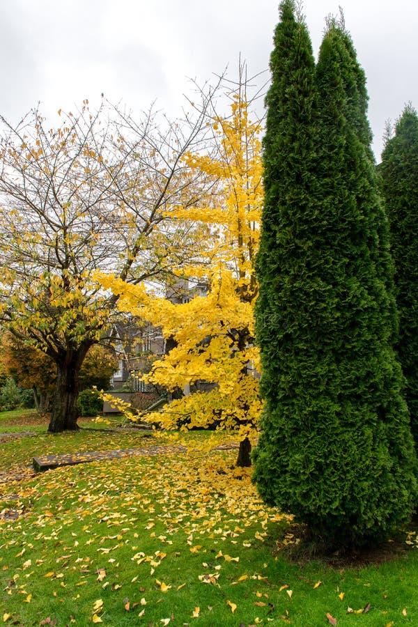 Różni kolory w drzewach vancouver obraz stock