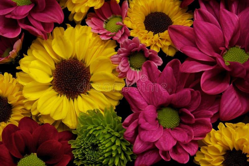 Różni kwiaty fotografia royalty free