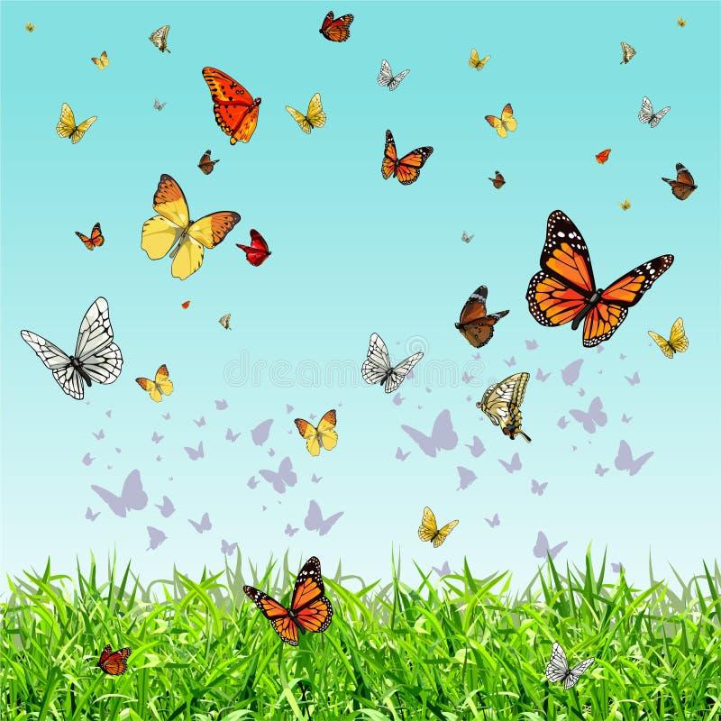 Różni motyle lata nad zieloną trawą ilustracji