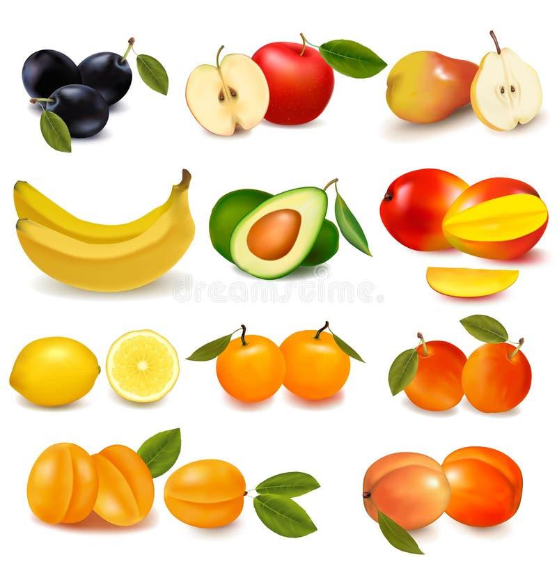 różni owoc grupy rodzaje ilustracji