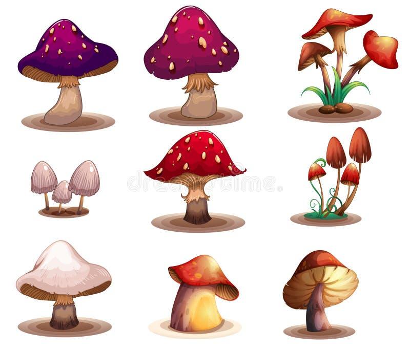 Różni rodzaje pieczarki ilustracji