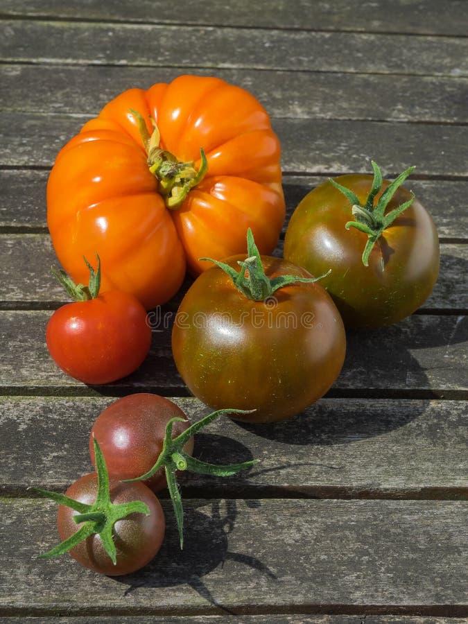 Różni typ pomidory na drewnianym tle zdjęcie stock