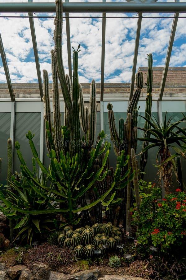 Różni typy kaktus r wpólnie w pawilonie ogród botaniczny obraz royalty free