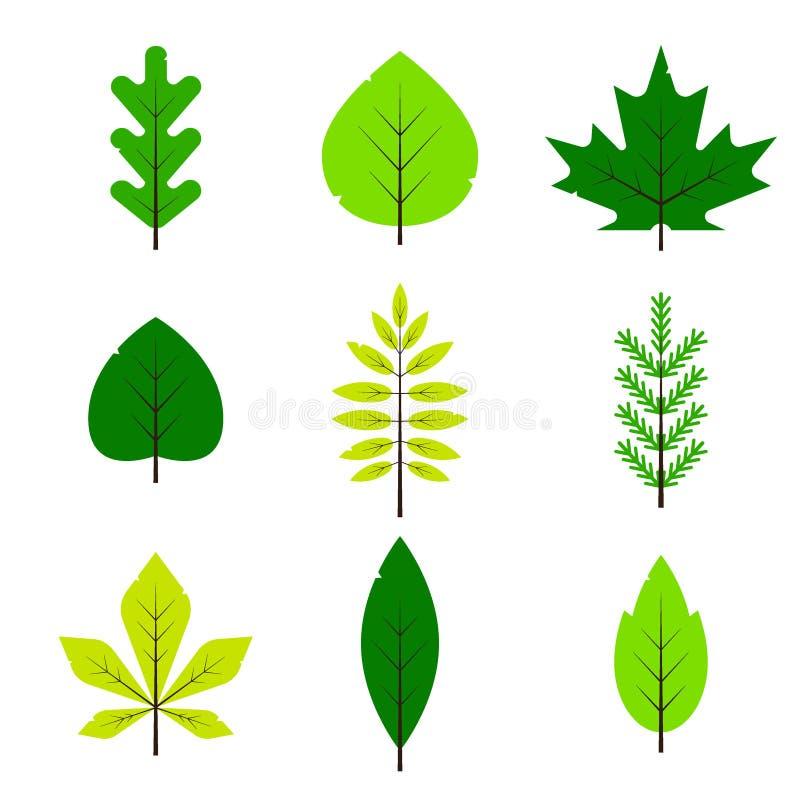 Różni zieleni liście ustawiający w mieszkanie stylu odizolowywającym na białym tle Wiosna liść, las gałąź liście, klon, świerczyn ilustracja wektor