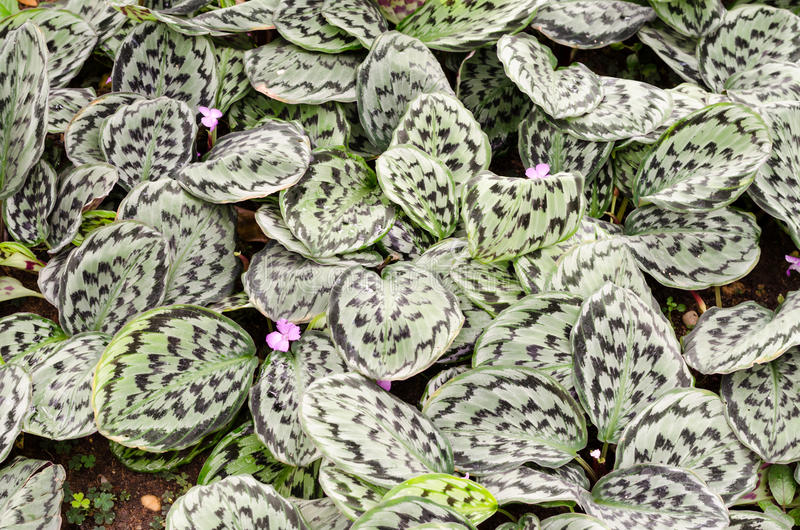 Różnobarwni roślina liście obraz stock
