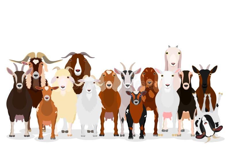 Różnorodna kózki grupa ilustracji