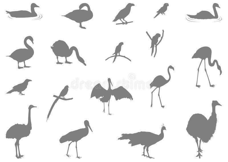 Różnorodna ptak sylwetka - grupa endotermiczne kręgowiec, charakteryzująca piórkami, bezzębne beaked szczęki kłaść ciężki royalty ilustracja